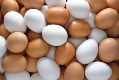 White eggs and brown eggs as a nutrition